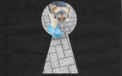 Sabre's Story….through the keyhole!
