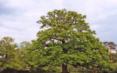 The Queen's Green Canopy – a fabulous nationwide tree planting initiative