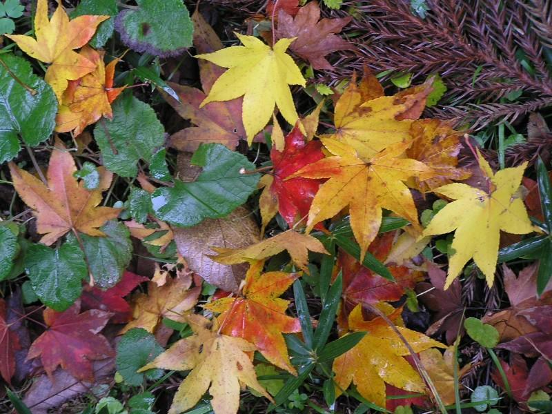 Autumnal Community walk