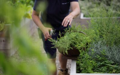 Top five tips for growing your own produce