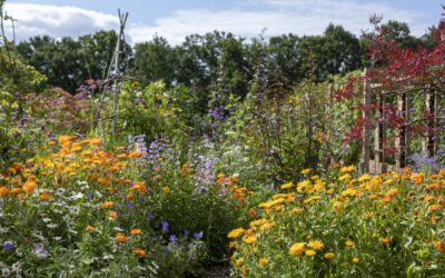 New Community Garden – Can You Help???