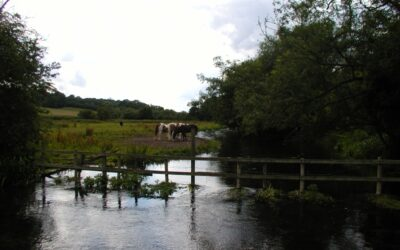 Sustainable Sarratt and the River Chess update from Alan