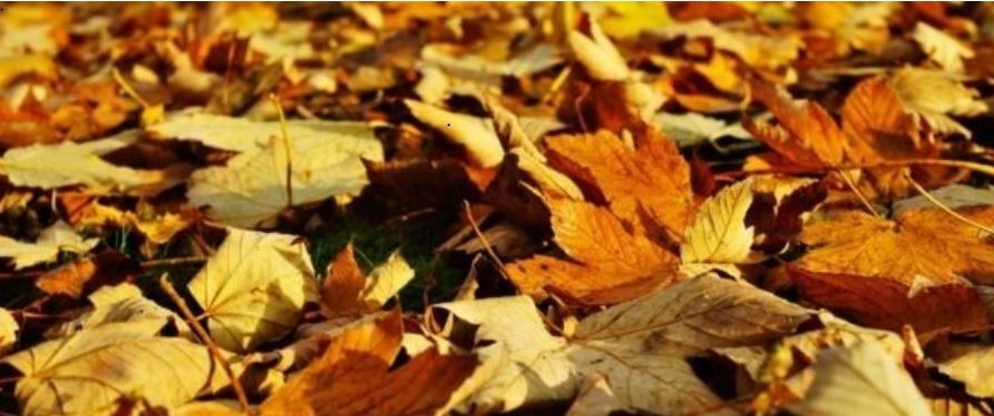 November Garden Tips….