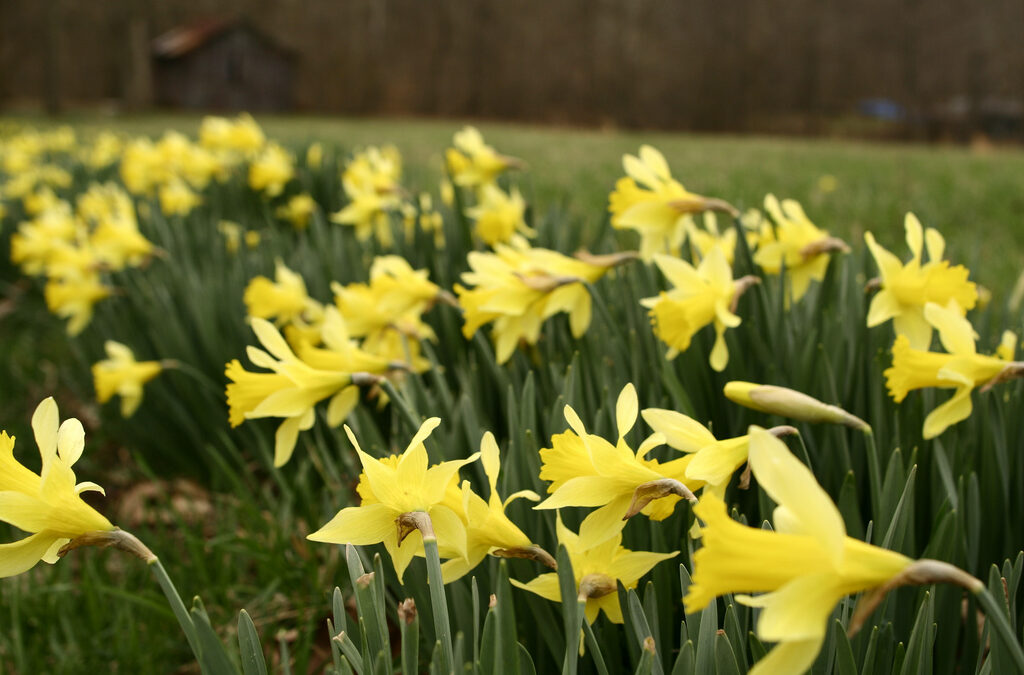 February garden tips…