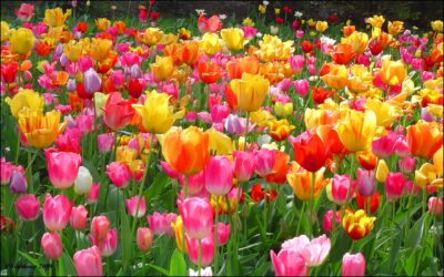 Sarratt Horticultural Society – new dates.