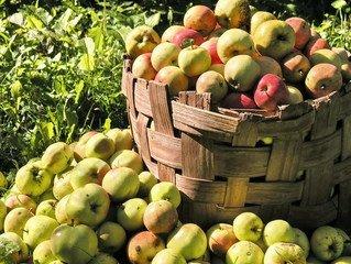 Sarratt Apple Fest – TODAY